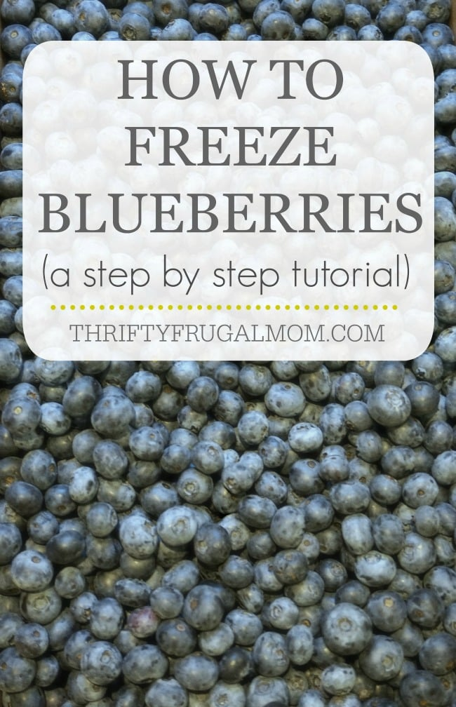 how-to-freeze-blueberries-photo-tutorial