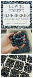 How to Freeze Blueberries tutorial