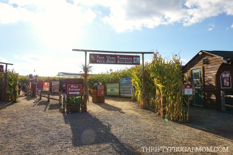 cherry-crest-adventuer-farm-corn-maze